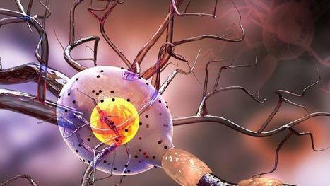 Neurobiologia de les emocions | casa i escola: educació compartida | Scoop.it