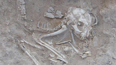 Ancient Egyptian kitten skeletons hint at cat domestication | Teaching history and archaeology to kids | Scoop.it