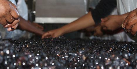 Quel futur pour le vin sur le continent africain ? - Le Figaro Vin | Univers du vin | Scoop.it