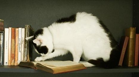 La chatte Molly, un véritable rat de bibliothèque | Bibliolecture | Scoop.it