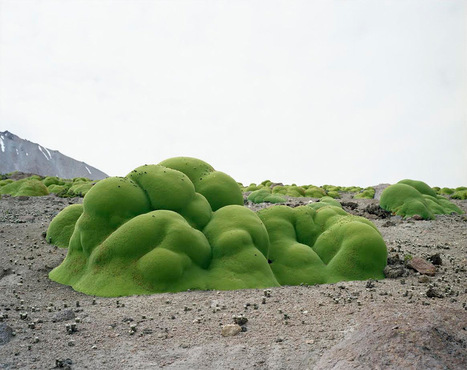 The Oldest Organisms In The World | Archivance - Miscellanées | Scoop.it
