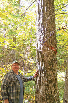 JUMP START - Qualified Forest Program sees major gains in first months of operation   Timberland Investment   Scoop.it