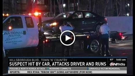 Florida man gets hit by car, attacks driver, fires gun in the air (VIDEO) | The Billy Pulpit | Scoop.it