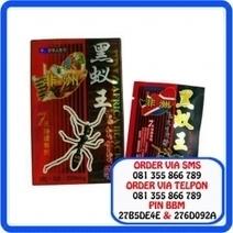 Obat Kuat Herbal Africa Black Ant | Central For Sex | Scoop.it
