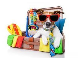 Pre Travel Checklist For Pet Owners During This Holiday Season | BestVetCare | Pet Care | Scoop.it