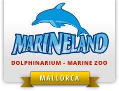 [VIDEO] Des dresseurs violentent des dauphins à Marineland | Shabba's news | Scoop.it