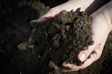 Antidepressant Microbes In Soil: How Dirt Makes You Happy | CLOVER ENTERPRISES ''THE ENTERTAINMENT OF CHOICE'' | Scoop.it