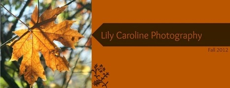 Lily Caroline Photography: Entering a photo contest :) | Photography Today | Scoop.it