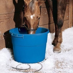 Heated Horse Water Buckets | Insulated Equine Waterers | | Horse and Rider Awareness | Scoop.it
