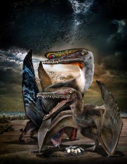 En bref : des œufs fossiles dévoilent la vie grégaire des ptérosaures | 21st Century Innovative Technologies and Developments as also discoveries, curiosity ( insolite)... | Scoop.it