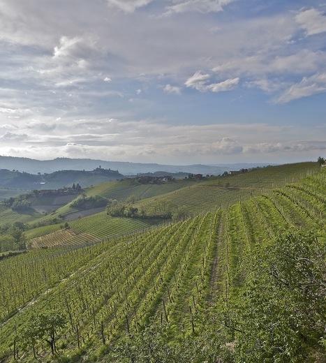 Barbera: Piedmont's Chameleon | Wine website, Wine magazine...What's Hot Today on Wine Blogs? | Scoop.it