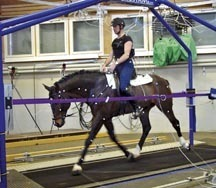 Equine practitioners explained: the biomechanics expert  - Horse & Hound | equine science | Scoop.it
