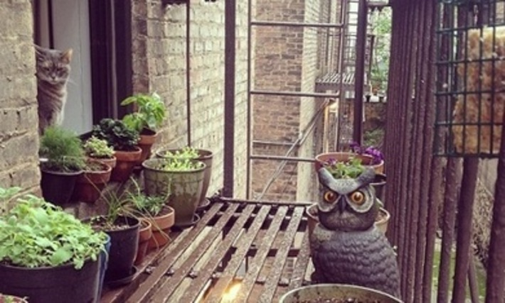 Don't listen to the propagandists behind the urban gardening fad. It's all lies | Container Gardening | Scoop.it