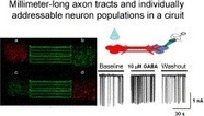 Neural circuits with long-distance axon tracts for determining functional connectivity | Micropatterns | Scoop.it
