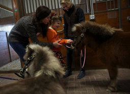 Miniature horses, major hopes   Wichita Eagle   Animal-Assisted Therapy - Aspect2   Scoop.it