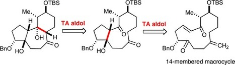 Approach to the Tricyclic Core of the Tigliane–Daphnane Diterpenes. Concerning the Utility of Transannular Aldol Additions | Euphorbia's chemistry and perspectives | Scoop.it