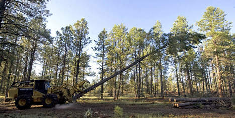 Group updates green label forestry standards | Sustainability Science | Scoop.it