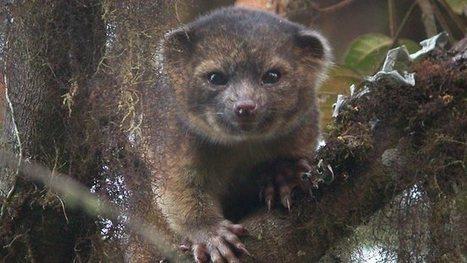 Découverte d'une nouvelle espèce de mammifère - TF1   Découvertes et voyages   Scoop.it