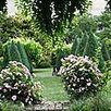 Un jardin de roses folles - Lumières de l'ombre | The Blog's Revue by OlivierSC | Scoop.it