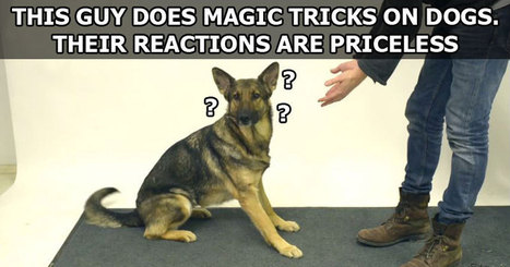 Magic Tricks for Dogs | Xposed | Scoop.it
