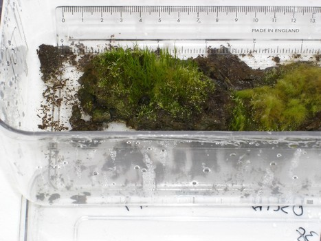 Scientists report regrowing moss frozen for 1,500 years | Erba Volant - Applied Plant Science | Scoop.it