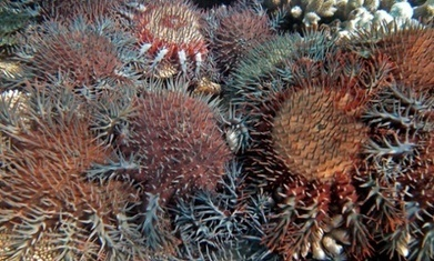 Coalition releases long-term plan for Great Barrier Reef   Ecosystems at risk   Scoop.it