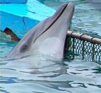6 Parallels Between The Circus &SeaWorld | Earth Island Institute Philippines | Scoop.it