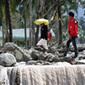 PHILIPPINES: Les revenus de l'agriculture mis à mal par le typhon Bopha | Risques et Catastrophes naturelles dans le monde | Scoop.it