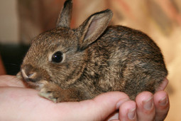 Teenage Girls Arrested for Throwing Bunny Against Wall Must be Prosecuted | Nature Animals humankind | Scoop.it