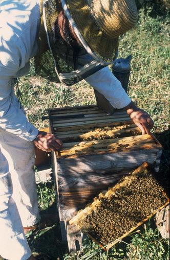 Les abeilles, maillon essentiel de la biodiversité - Ministère de l'agriculture, de l'agroalimentaire et de la forêt   Patrimoine Végétal et Biodiversité   Scoop.it