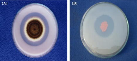 Growth stimulation and management of diseases of ornamental plants using phosphate solubilizing microorganisms: current perspective | Plant-Microbe Symbiosis | Scoop.it