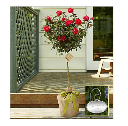 Gift personalized flowers for your dear ones at exceptional discounts through 1800flowers coupon 30% | Enjoy your shopping with discounts | Scoop.it