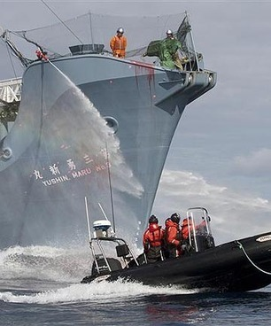 Sea Shepherd to set sail from Wellington | Earth Island Institute Philippines | Scoop.it