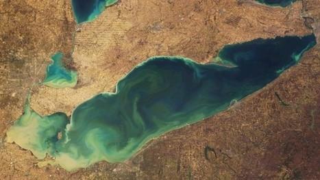 Will Recycling Phosphorus Help Stop Algae Blooms? | New agricultural trends | Scoop.it