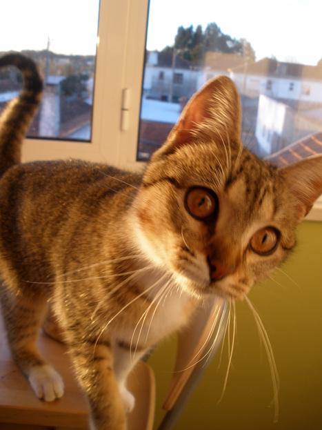 How to Train Cats – Understanding a Cat's Behavior Before You Begin | Cat Stuff | Scoop.it