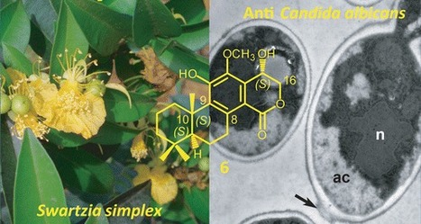 Anti-Candida Cassane-Type Diterpenoids from the Root Bark of Swartzia simplex | Natural Products Chemistry Breaking News | Scoop.it