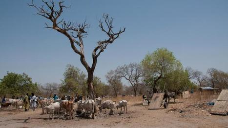 Struggling to force the Sahara back as climate change wreaks havoc in Senegal   CLIMATE CHANGE WILL IMPACT US ALL   Scoop.it