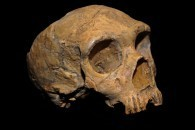 Dating encounters between modern humans and Neandertals | HeritageDaily Archaeology News | Scoop.it