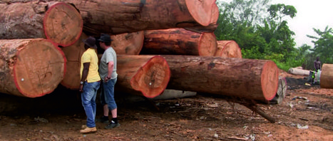 Quantum Global backs Angolan timber with $50mln | Timberland Investment | Scoop.it