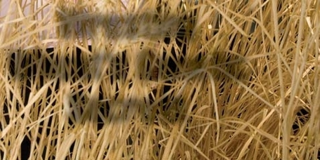 Wheat weed control topic of North Carolina meeting | Grains content from Southeast Farm Press | Research from the NC Agricultural Research Service | Scoop.it