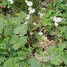 D.I.Y. Herbalism