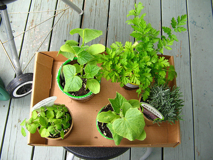 9 Healing Herbs You Can Grow at Home | TruthTheory | Health and Wellness | Scoop.it