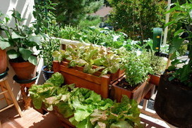 10 Expert Tips for Growing Edibles in Containers | Container Gardening | Scoop.it