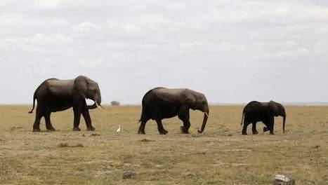 Zo beschermt Google Earth de olifanten van Kenia   15 innovatieve ICT showcases   Scoop.it