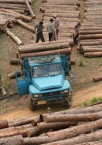 Illegal logging takes 30 football fields a minute: why isn't Australia acting? | Geography 200 FT | Scoop.it