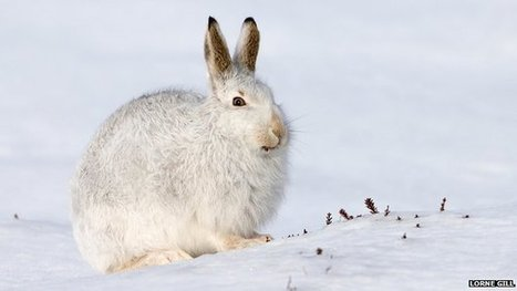 How wildlife copes in the Cairngorms | The living world | Scoop.it