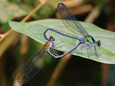 Biodiversité : Deux nouvelles espèces découvertes au Gabon - Gabonreview.com | Actualité du Gabon | | De Natura Rerum | Scoop.it