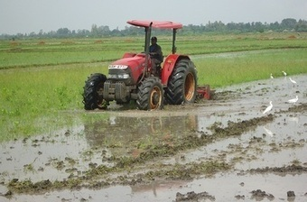 China institute seeks to boost rice production in Kenya | Daraja.net | Scoop.it