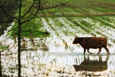 Tension sur les nitrates | Agriculture en Gironde | Scoop.it