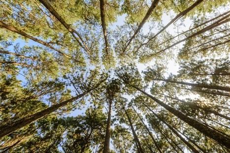 Agroforesterie : les arbres à notre secours | Revue | Scoop.it
